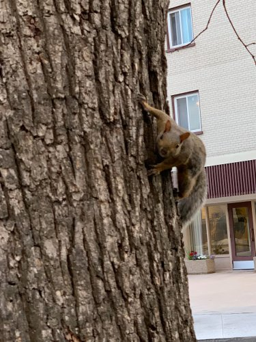 I thought this squirrel was going to attack me!